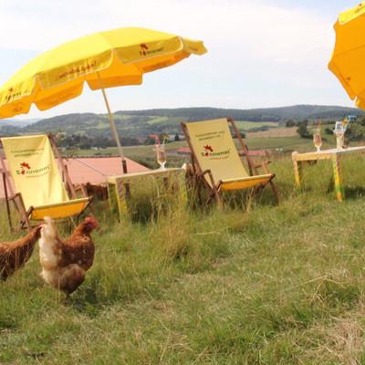 Hühner mit Sonnenstühlen