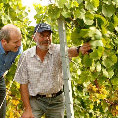 Weingutsleiter Horst Kolesch und Lothar Floesser zwischen Weinreben
