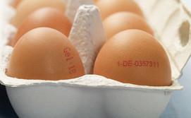 Eier in einem Eierkarton