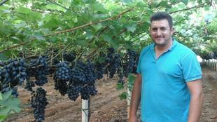 Betriebsleiter zwischen reifen Weintraubenreihen