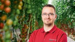 ein Mitarbeiter steht zwischen zwei Tomatenreihen