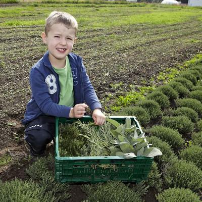 ein Junge kniet auf einem Feld mit Kiste Kräutern