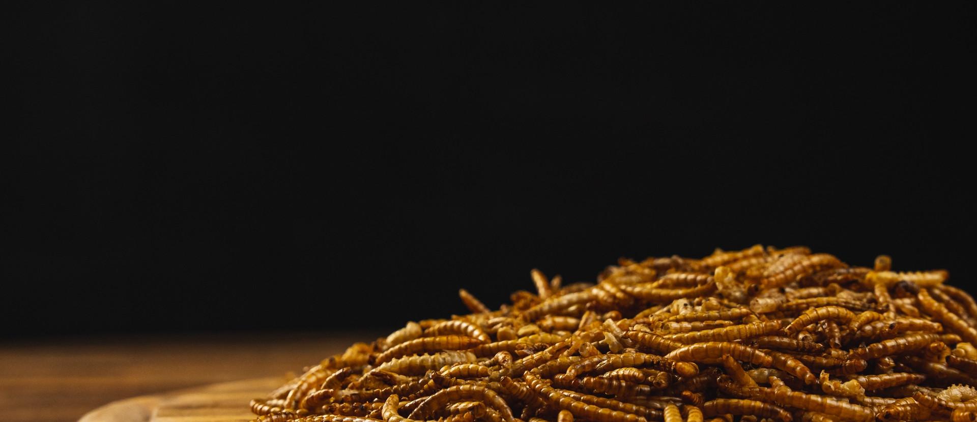 Titelbild tierische Produkte Mehlwürmer