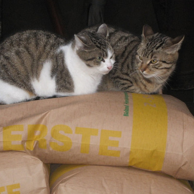 zwei Katzen sitzen auf Säcken