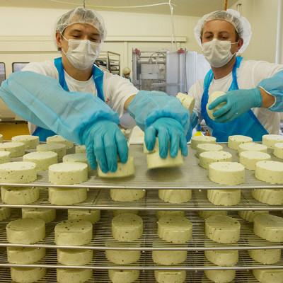 Mitarbeiter setzen Käse auf Platten