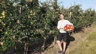 Mitarbeiterin mit einem Korb voller Äpfel auf der Obstwiese