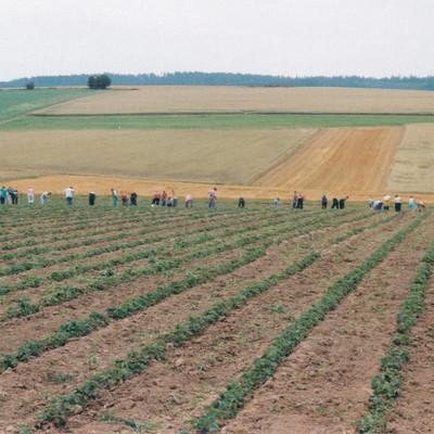 Mitarbeiter bei der Ernte auf einem Feld