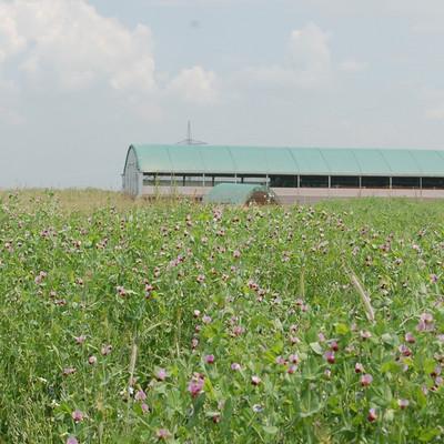 Blumenwiese mit großem Stall