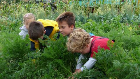 Kinder beim ernten