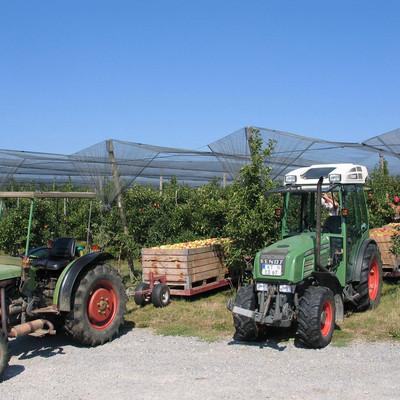 Zwei Traktoren helfen bei der Apfelernte