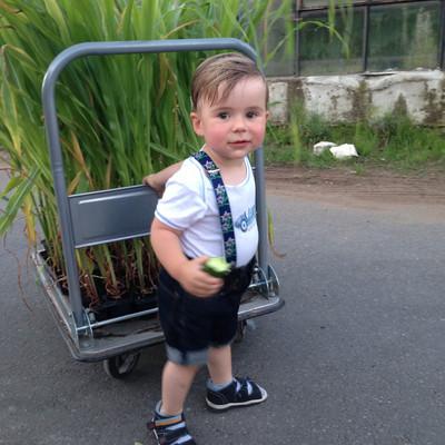 kleiner Junge schiebt Wagen mit Maispflanzen