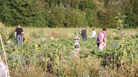 Feld mit Saisgarten-Parzellen Besitzern