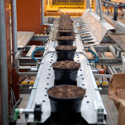 Töpfe mit Erde auf einem Industrielaufband