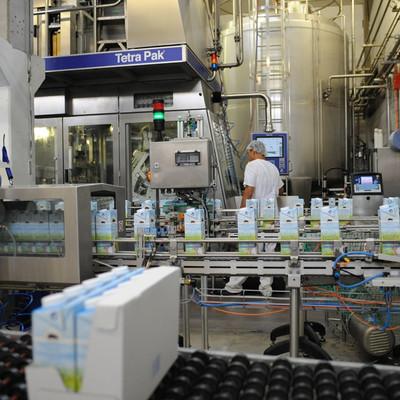 Förderband mit Milchpackungen in einer Abfüllanlage