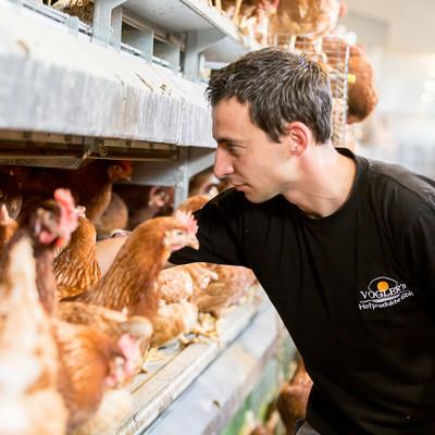 Mann steht in Hühnerstall und greift zwischen die Hühner