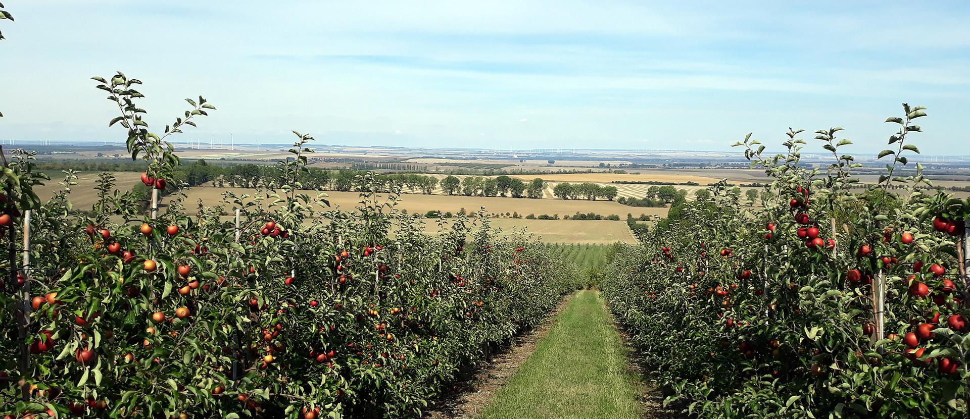 Blick von einer Apfelplantage in die Landschaft