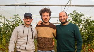 Drei Mitarbeiter in einem Gewächshaus zwischen Tomatenpflanzreihen