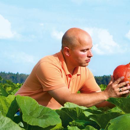 glatzköpfiger Mann mit hellem Poloshirt kniet in einem Kürbisfeld und schaut sich einen Kürbis genauer an
