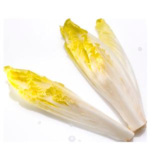 Abbildung Chicorée