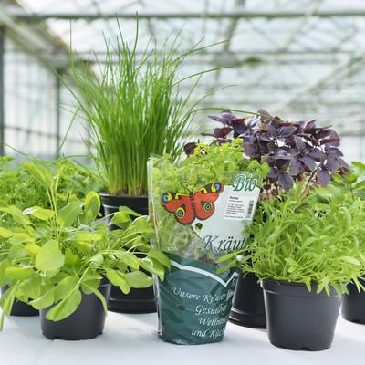 sieben verschiedene Kräuterpflanzen auf einem Tisch im Gewächshaus