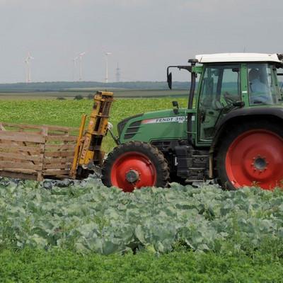 Traktor auf einem Rot- und Weißkrautfeld