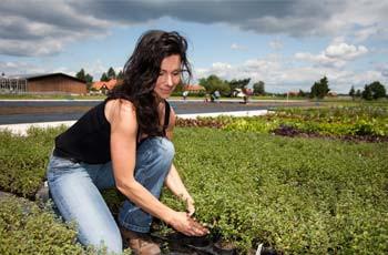 Frau im Feld erntet eine Kräuterpflanze