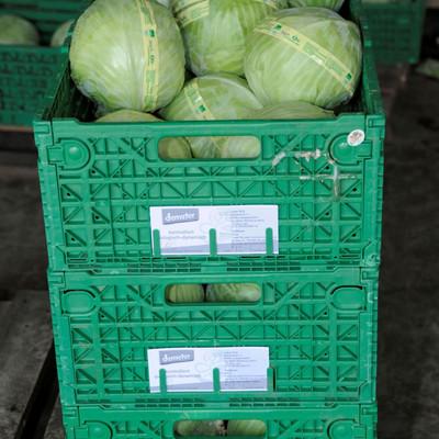 grüne Kisten gestapelt mit Weißkraut-Köpfen