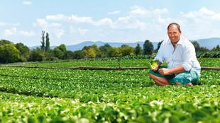Der Betriebsleiter mit Salatherzen auf dem Feld