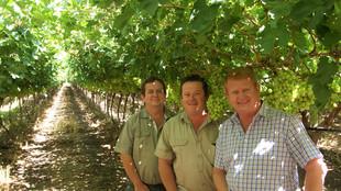 Drei Männer vor Weintrauben