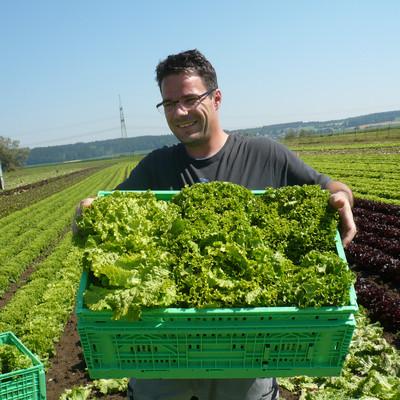 ein Mann auf einem Salatfeld mit einer Kiste Salatköpfe