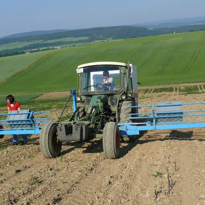Mann mit Traktor und Frauen auf einem Feld beim Spargel schneiden