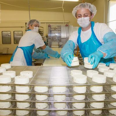Mitarbeiter setzen Käse auf Gitter