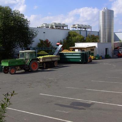 Traktor lädt geerntete Äpfel vor der Industriehalle um