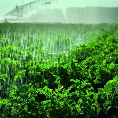 Pflanzen werden bewässert