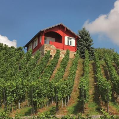 Haus an einer Weinplantage