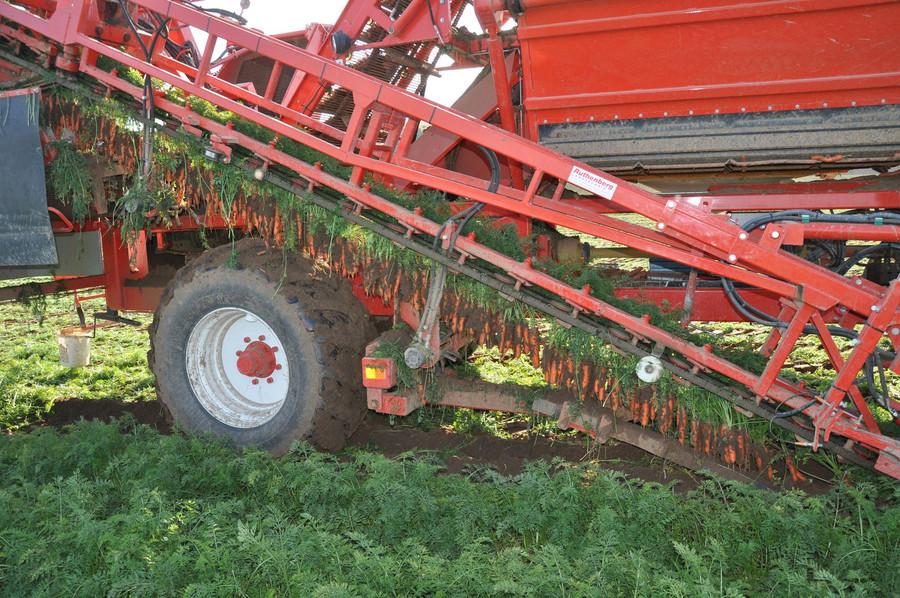 Möhren Erntemaschine auf einem Feld