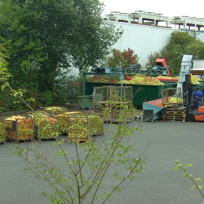 Äpfel werden vom LKW in Kisten umgeladen