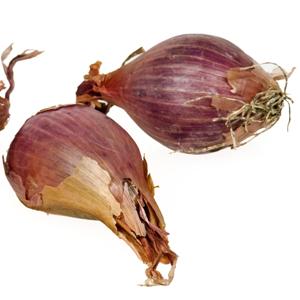Abbildung Schalotte