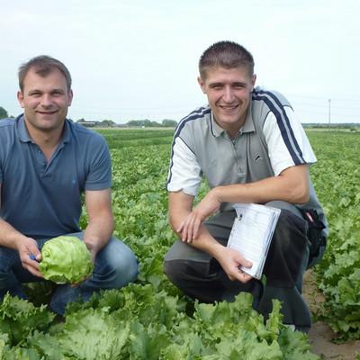zwei Männer knien auf einem Salatfeld
