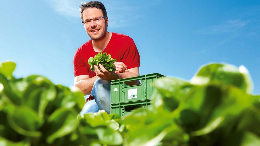 Salatbauer Stockner auf Feld