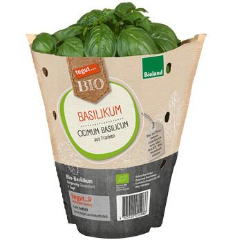 Bio Basilikum-Topf
