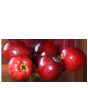 Abbildung Cranberry