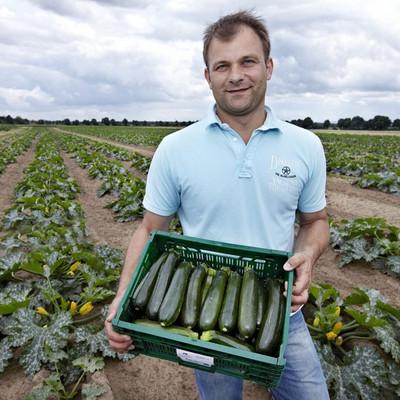 Mann steht auf einem Zucchinifeld und hat eine Kiste mit Zucchinis in den Händen