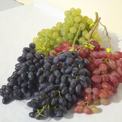 verschiedene Trauben, grün, rot und blau