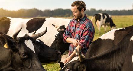 Regionalität Milchbauer mit Kühen auf der Weide
