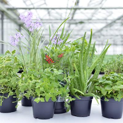 sieben verschiedene Kräuterpflanzen auf einem Tisch