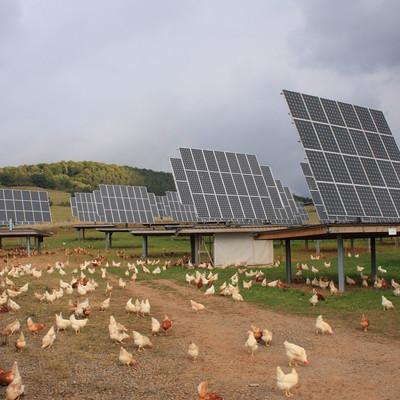 Hühner-Auslauf vor der Solaranlage