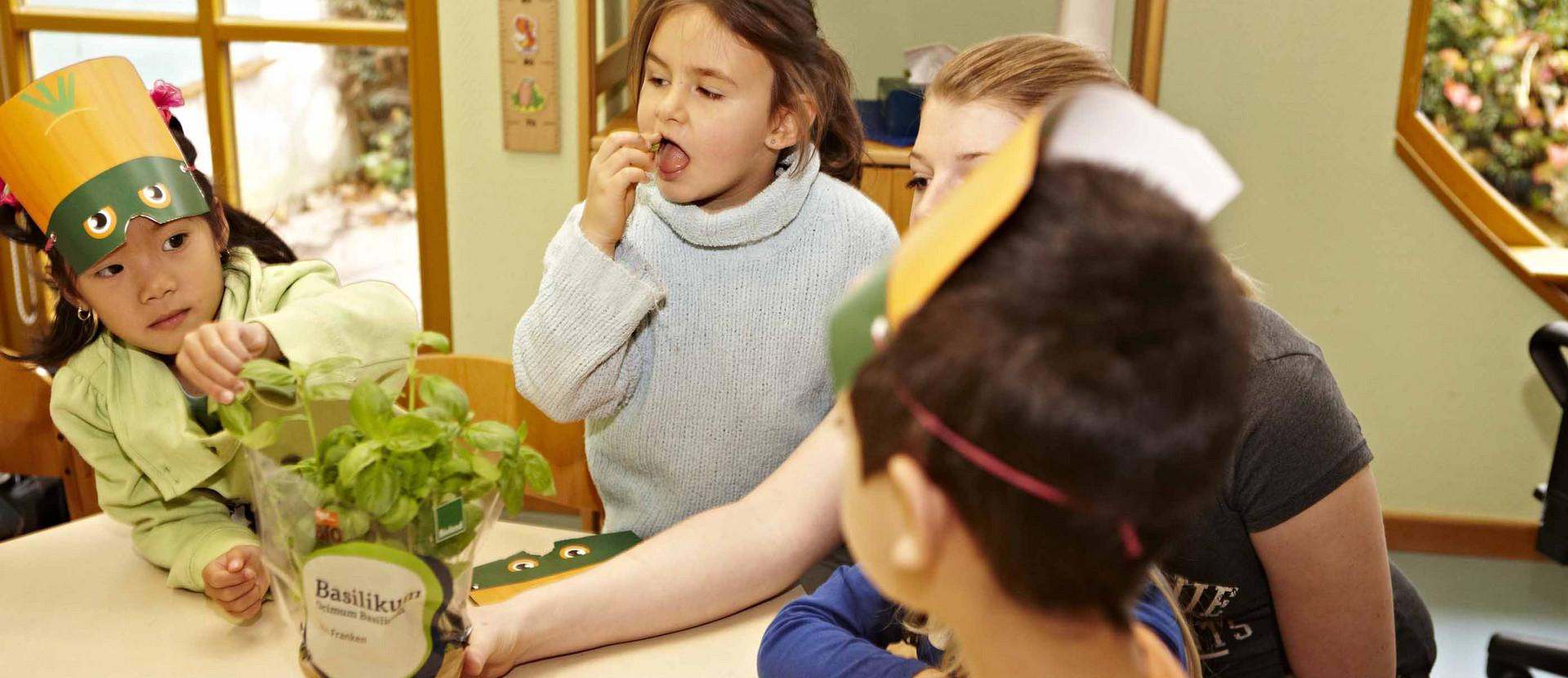 Kinder kosten Basilikum