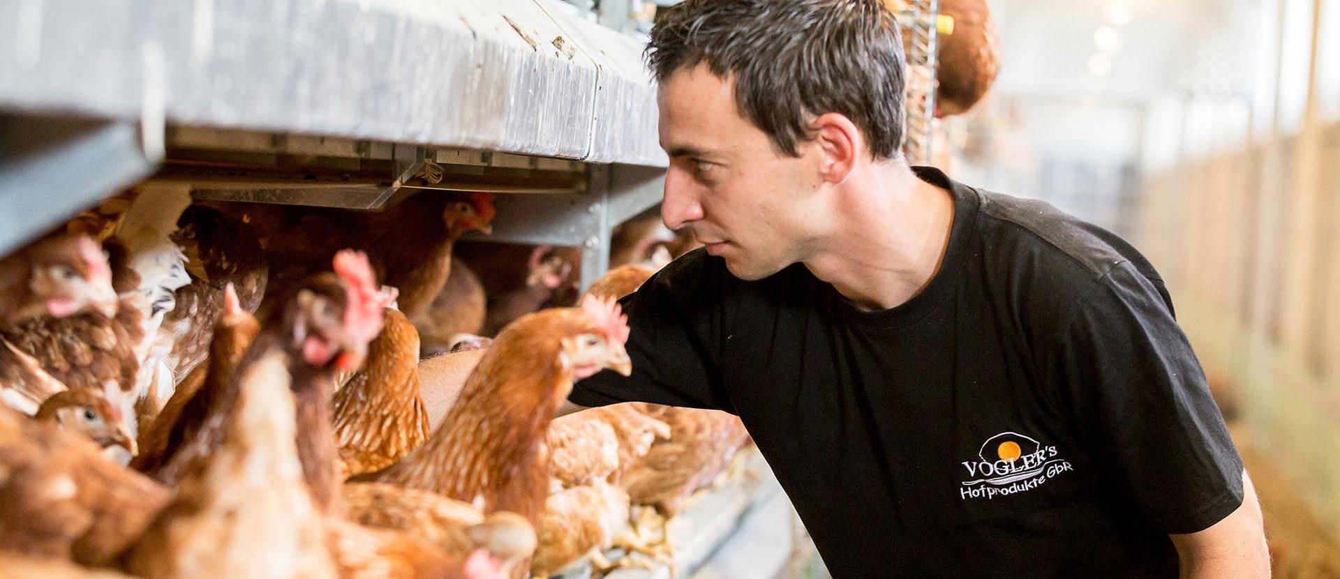 Mann, der Hühner füttert