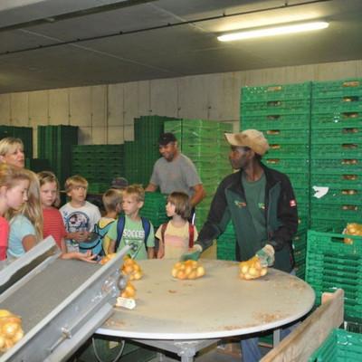 Kinder besuchen Remlinger Rüben und schauen beim Kartoffeln abpacken zu